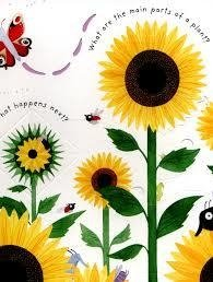 HOW DO FLOWERS GROW? - Usborne Lift the flap - comprar online