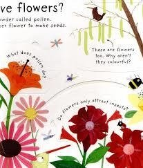 HOW DO FLOWERS GROW? - Usborne Lift the flap en internet