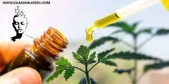 Best CBD Oil